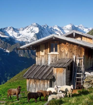Seduck Hochalm am Stubaier Höhenweg